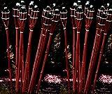24 Stück rotbraune Gartenfackel 120 cm aus Bambus / Bambusfackel inkl. Docht + Tank / Öl-Fackel /...