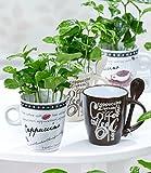 BALDUR-Garten Coffea Arabica mit Kaffeetasse,1 Set