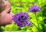 3x RIESEN Zierlauch Blumenzwiebel   Allium 'Gladiator' mit atemberaubenden Blüten die größer sind...