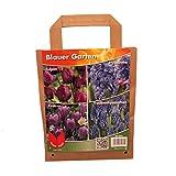 Pflanzenservice Blumenzwiebel-Sortiment 'Blauer Garten', Bunt, 30 x 20 x 15 cm