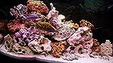 20kg Mixed Set der Steine für Malawi ZWERGBUNTBARSCH Tanganjika Aquarium Ocean Rock