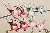 Vögel mit Clip Dekovögel Frühling Deko 8 tlg