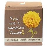 Geschenk-Anzuchtset 'Sunshine Flower' - Teddybär Sonnenblume