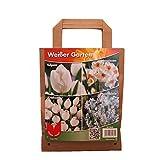 Pflanzenservice Blumenzwiebel-Sortiment 'Weißer Garten', Bunt, 30 x 20 x 15 cm