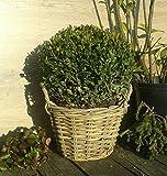 Pflanzkorb 28 cm Weide graubeige, kein Kunststoff !! Blumen Pflanzgefäß Blumentopf Korb Landhaus...
