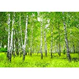 Vlies Fototapete 350x245 cm PREMIUM PLUS Wand Foto Tapete Wand Bild Vliestapete - SUNNY BIRCH FOREST...