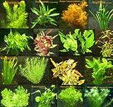 6 Bund - ca. 40 Aquariumpflanzen + Dünger, algenmindern, bunte Unterwasserwelt - Mühlan