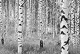 Komar XXL4–023368x 248cm 'Schwarz und Weiß Forest Woods' Tapete Wandbild–Weiß/Creme...