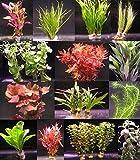 6 Bunde mit über 40 Aquarium-Pflanzen - buntes Sortiment für ein 60 Liter Aquarium