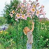 Lilie Urandi - 2 Lilien-Zwiebeln - Lilium Zierpflanze, Liliengewächs Blumenzwiebeln zum Pflanzen,...