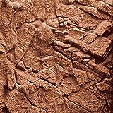 Juwel Aquarium 86932 Stone Clay