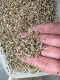 Bio Alfalfa Luzerne Keimsaat - Sprossensamen für die Zucht von Alfalfasprossen - der gesunde...