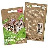 PRETTY KITTY Katzenminze Samen für Katzen, Premium Katzenminze Saatgut (Nepeta Cataria) für 150...