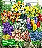 BALDUR-Garten 140 Blumenzwiebeln Spar-Paket, 140 Zwiebeln im Mix mit Tulpen, Narzissen Hyazinthen,...
