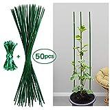 Jane Choi 50 Stück Pflanzenstütze Tomatenstangen Rankgitter Grün Pflanzstab Rankstab 60 cm aus...