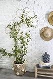 RISEON Boho Vintage DIY 13 Stück Bambus Wandspalier Set, minimalistische Pflanzenausstellung,...
