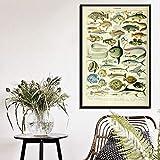 yhyxll Poster Drucke Retro Ozean Meer Muschel Fisch Tier Vintage Life Chart Biologie Malerei Kunst...