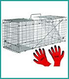 Praknu Marderfalle Lebendfalle 79cm Gro - Effektiv - Sicher inkl. Handschuhe - fr Katzen, Fuchs,...