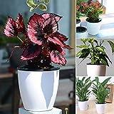 ZAK168selbstwässernde Pflanze Blume Topf, Indoor Outdoor Kunststoff Blumentopf mit Store Wasser...
