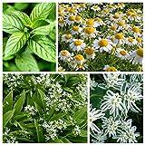 Schädlingsabweisendes Pflanzensatz - Wühlmäuse - Samen von 4 Pflanzenarten - 4 Päckchen Samen