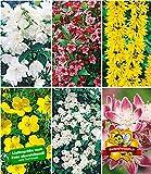 BALDUR-Garten 5 Meter Blüh-Hecken-Kollektion, Blütenhecke 6 Pflanzen Forsythie, Weigelie, Jasmin,...