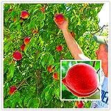 Pinkdose Super süße Pfirsiche, seltener Pfirsichbaum, Topfpflanze für zu Hause Hinterhof, leicht...